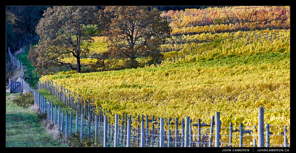 Vineyard on Salt Spring Island