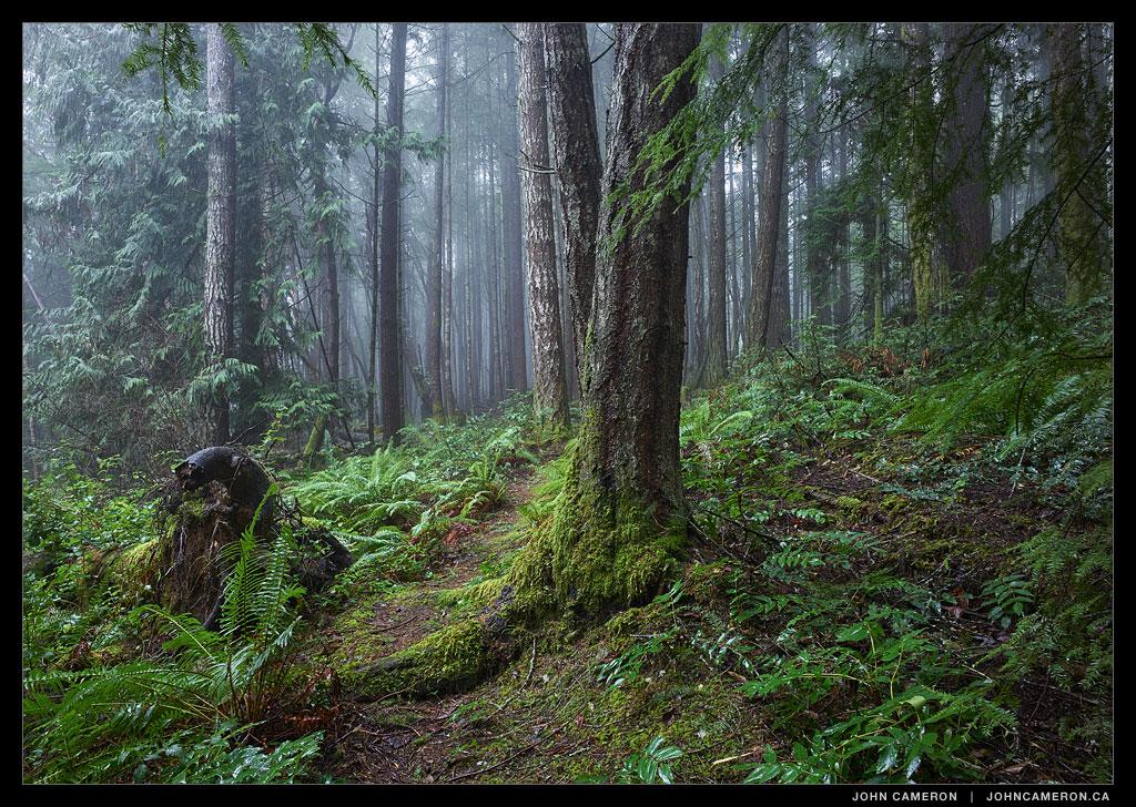 Forest Trail on Salt Spring Island