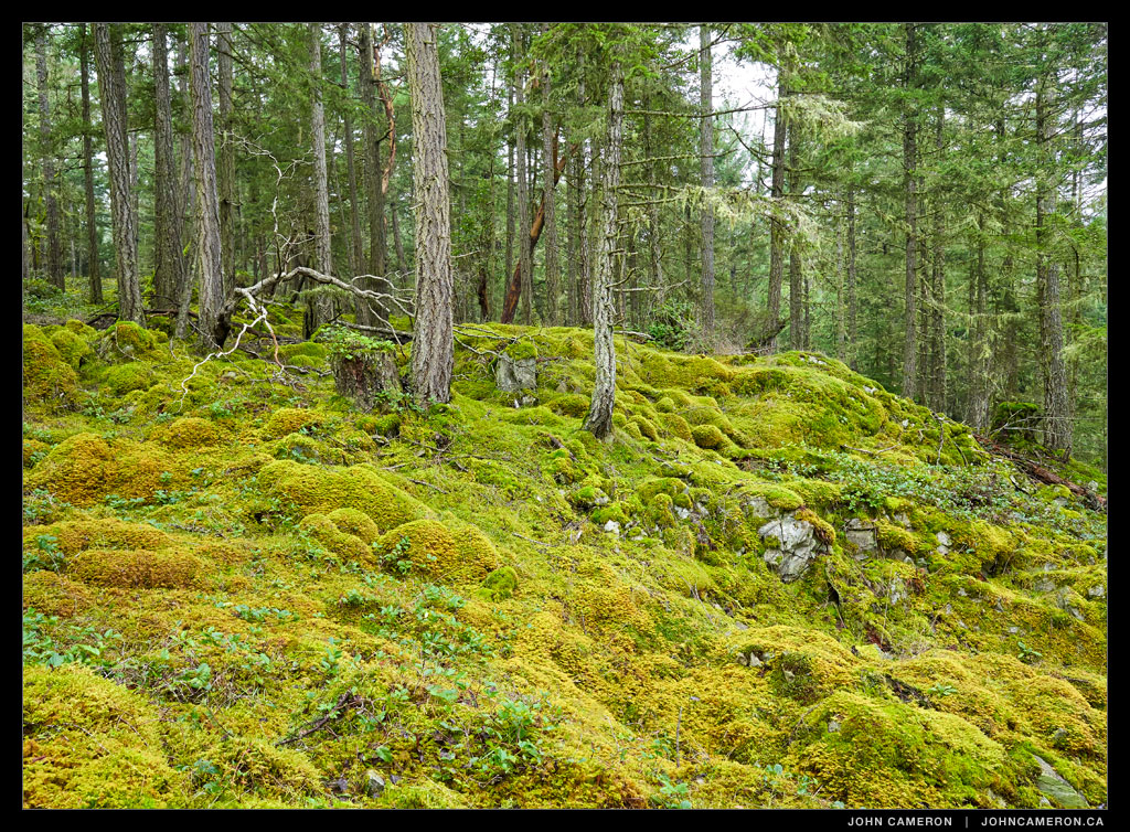 Moss on a hillside