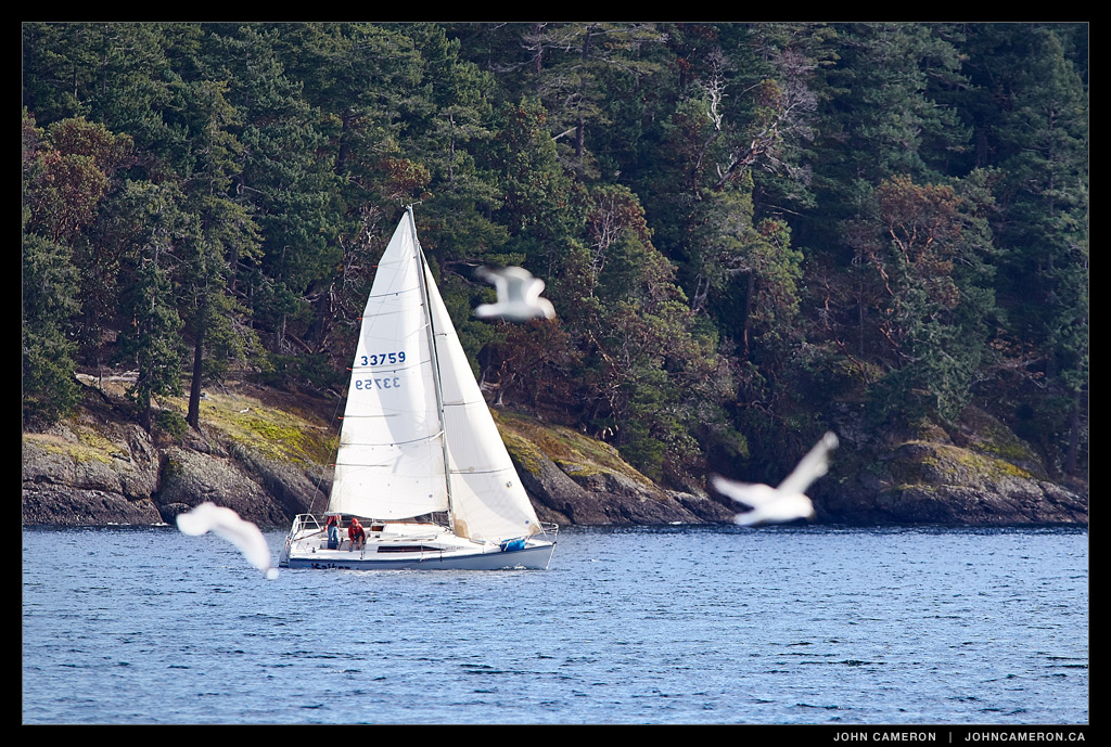 Racing with the Gulls