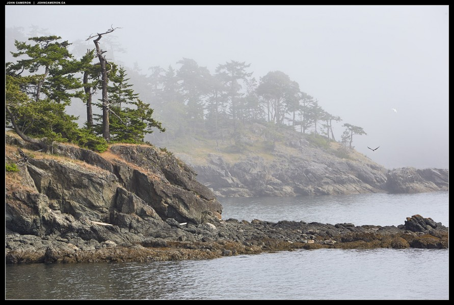 Coastal Fog in Spring
