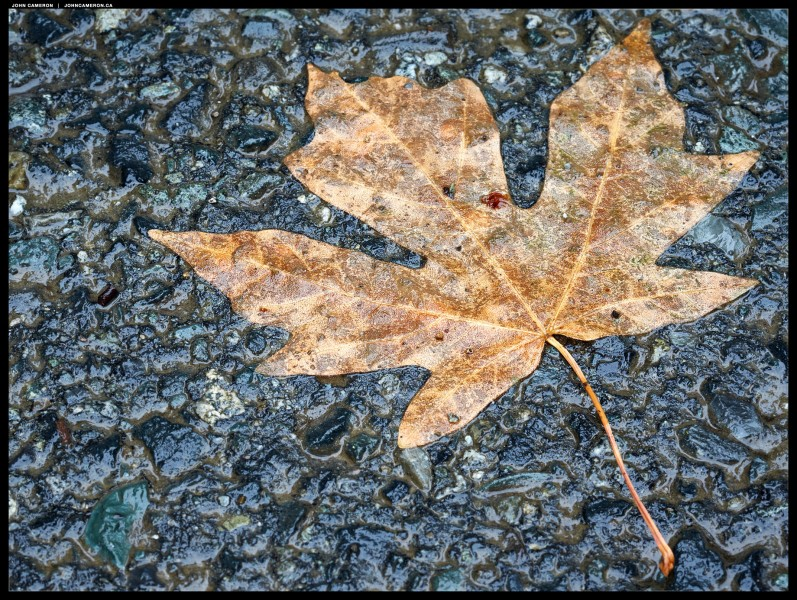Leaf plastered on the road