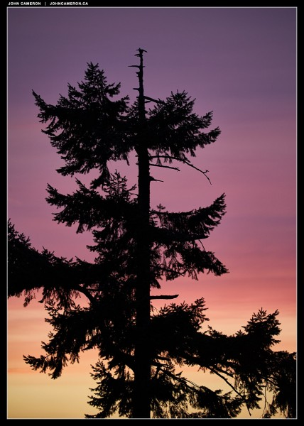 local tree after sunset