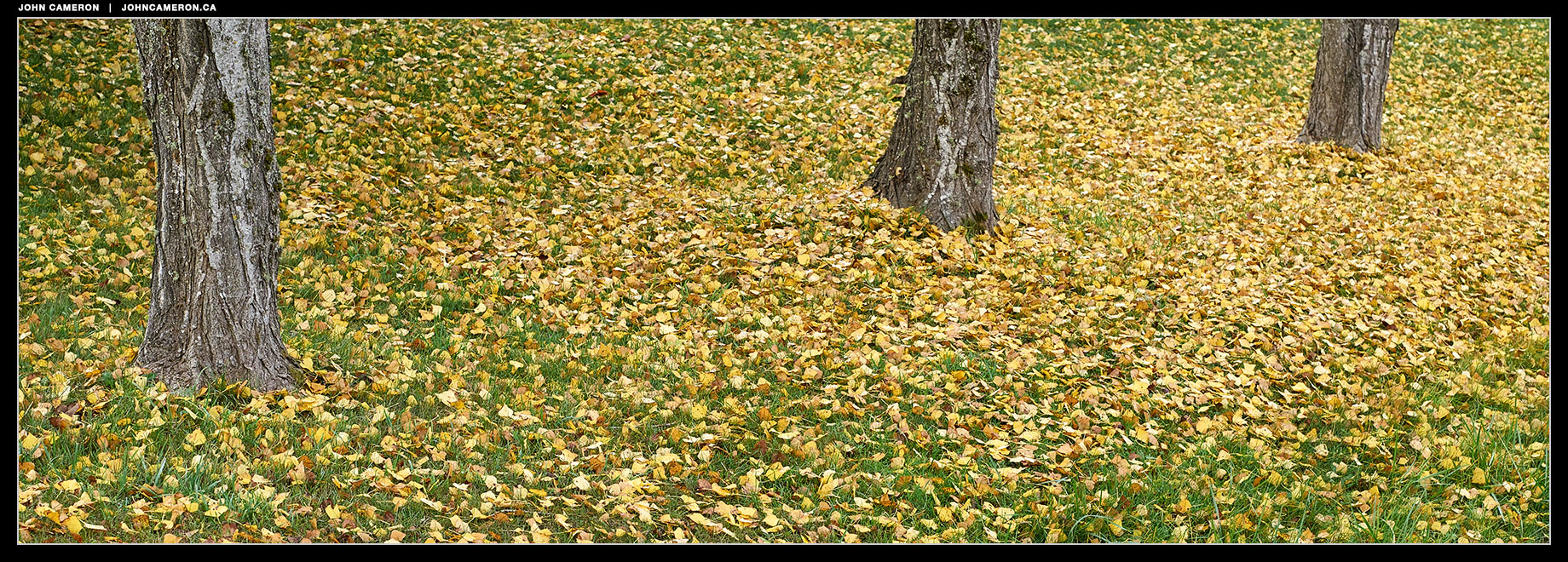 Leaves Down